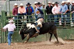Free Bull Riding Royalty Free Stock Photography - 13267817