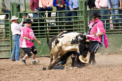 Bull riding. APACHE JUNCTION, AZ - FEBRUARY 26: A bucking bull jumps over a cowboy in the bull riding competition at the Lost Dutchman Days Rodeo on February 26 royalty free stock images