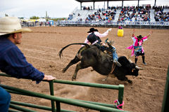 Free Bull Riding Stock Photography - 13267832