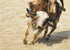 Bull Riding. Bull ride on a rodeo event stock photo