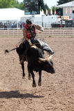 Bull Riding - Cheyenne Frontier Days Rodeo 2013 Royalty Free Stock Photo