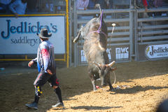 Bull Riding & Clown Stock Images
