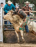 Bull Riding Royalty Free Stock Images