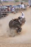 Bull riding Stock Photo