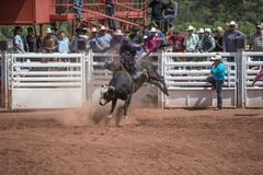 Bull Riding Royalty Free Stock Photo