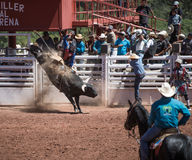 Bull Riding Stock Image