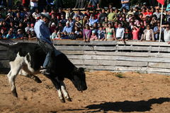 Bull rodeo. Championship in Chiloe, Chilean Patagonia Stock Images