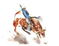 Bull rodeo watercolor painting illustration isolated on white background american sport lifestyle tradition wild west Stock Photo
