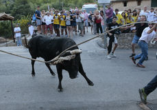 Bull run celebration in Mallorca, Spain. Stock Photography