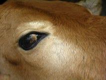 Bull's eye stock photo