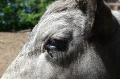 Bull's eye Royalty Free Stock Photos