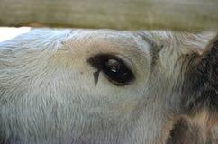 Bull's eye Stock Images
