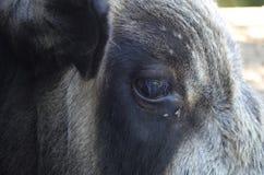 Bull's eye Royalty Free Stock Photography