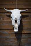 The bull's skull hanging on the wooden brown wall Royalty Free Stock Photography