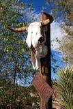 Texas longhorn skull royalty free stock photos