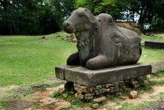 Bull sagrado Fotografia de Stock Royalty Free