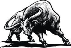 Bull salvaje Fotos de archivo