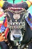 Bull santa Fotos de archivo libres de regalías