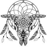 Bull Scull with Dream catcher Royalty Free Stock Image