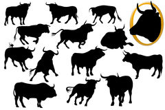 Bull silhouettes Stock Photos
