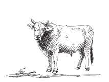 Bull sketch Stock Image