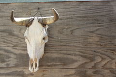 Bull Skull Royalty Free Stock Image