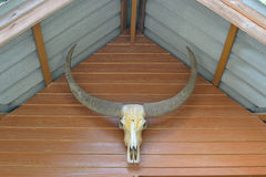 Bull skull Royalty Free Stock Images