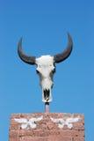 The bull skull Royalty Free Stock Photos