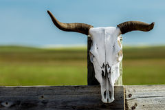 Bull Skull on a Fence Post. Bleached bull skull on an old worn out fence post in rural Alberta Canada Royalty Free Stock Photography