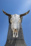 Bull skull hanging on a concrete pillar Royalty Free Stock Photo