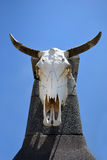 Bull skull hanging on a concrete pillar Stock Photo