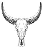 Bull skull with horns Stock Photo