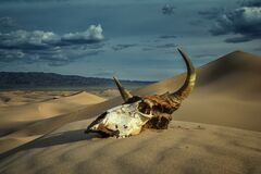 Free Bull Skull In Sand Desert And Storm Clouds Stock Photo - 182339700