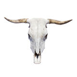 Bull skull. Top view, isolated Royalty Free Stock Image
