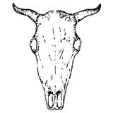 Bull skull (vector) Stock Photo
