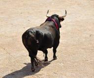 Bull in Spagna Fotografia Stock