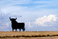 Bull of Spain. A typical symbol of Spain, silhouette Royalty Free Stock Image