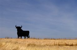 Bull - Spain Fotografia de Stock Royalty Free