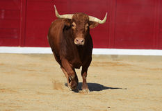 Bull in spain Royalty Free Stock Photography