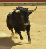 Bull Stock Photography
