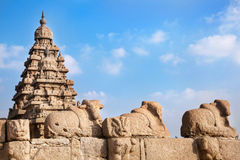 Bull statues. At blue sky in Shore temple, Mamallapuram, Tamil Nadu, India Royalty Free Stock Image