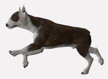 Bull Terrier - 06. Bull Terrier in motion. Trotting or walking Royalty Free Illustration