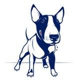 Bull-terrier Images libres de droits