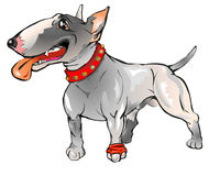 Bull Terrier. A funny pet's character useful for print and web Royalty Free Stock Photos