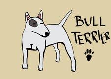 Bull terrier Stock Afbeelding