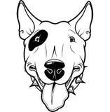 Bull-terrier Photo libre de droits