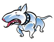 Bull Terrier Stock Photos