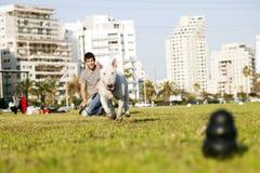 Bull Terrier Biega dla Żuć zabawkę w parku Fotografia Royalty Free