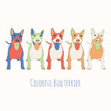 Bull-terrier in color Stock Photo