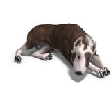 Bull Terrier Dog. 3D rendering with clipping path and shadow over white Stock Photo
